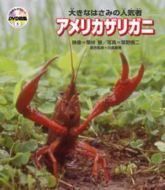 ・自然なぜなに?DVD図鑑 第5巻大きなはさみの人気者 アメリカザリガニ