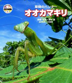 ・自然なぜなに?DVD図鑑 第6巻草間のハンター オオカマキリ